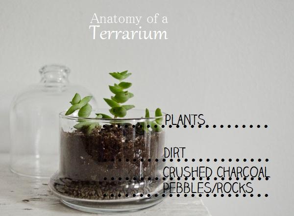 DIY Mini Terrarium